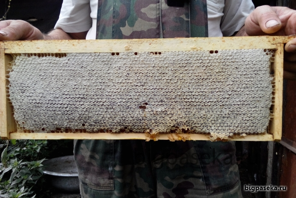 сотовый мёд в магазинной рамке