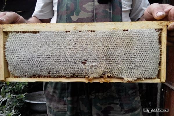 мёд в сотах рамка 2 кг