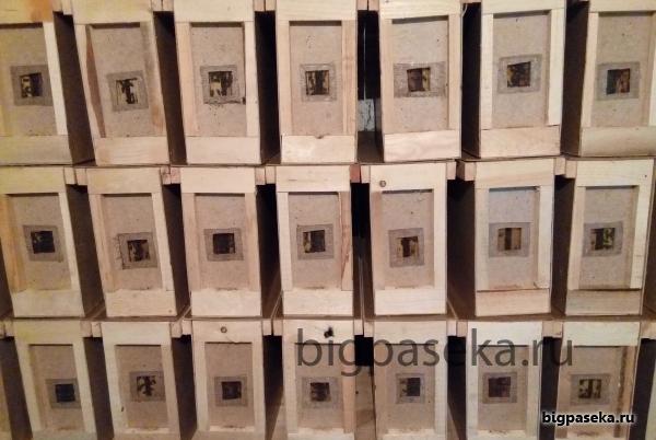 заселенные пчелопакеты