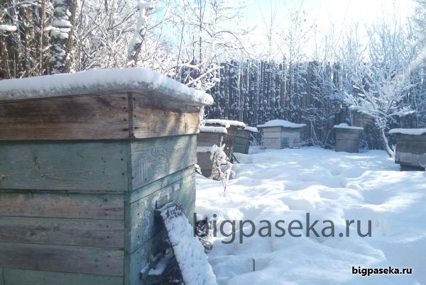 зимовье пчел