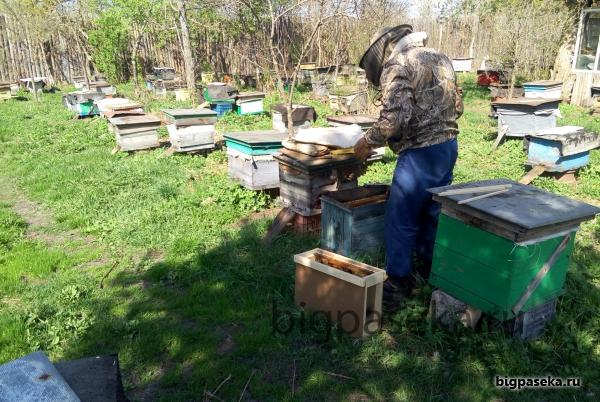 как мы формировали пчелопакеты