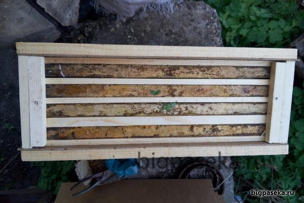 пчелопакет формирование 1