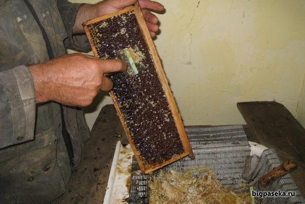 забрус пчелиный, распечатка сот
