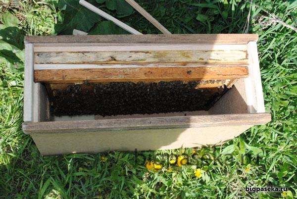 Продаю с собственной пасеки пчелиные семьи, пчелопакеты, отводки, рой с мая по сентябрь.