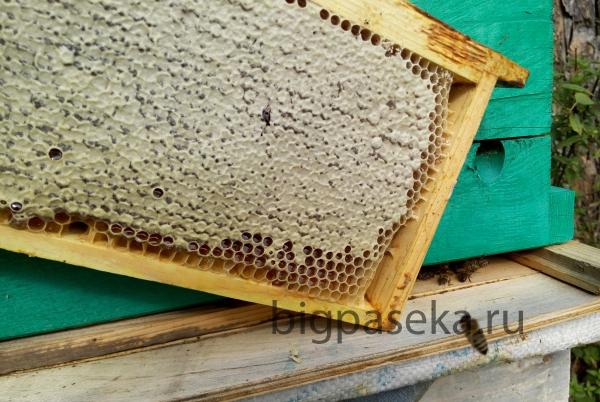 мёд в сотах с пасеки