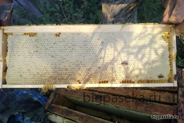 сотовый мед в магазинной рамка